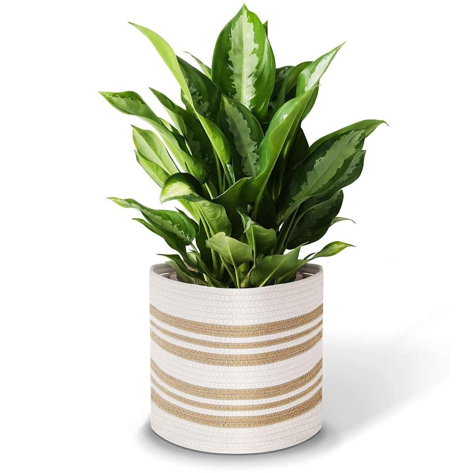 """Winter <a href=""""https://www.glamour.com/gallery/houseplants-for-beginners?mbid=synd_yahoo_rss"""" rel=""""nofollow noopener"""" target=""""_blank"""" data-ylk=""""slk:plant moms"""" class=""""link rapid-noclick-resp"""">plant moms</a>: Amazon is hiding some seriously chic decor items, like this rope basket that doubles as a pot cover. $16, Amazon. <a href=""""https://www.amazon.com/Storage-Baskets-Planter-Organizer-Handles/dp/B07SRRG1YL/"""" rel=""""nofollow noopener"""" target=""""_blank"""" data-ylk=""""slk:Get it now!"""" class=""""link rapid-noclick-resp"""">Get it now!</a>"""