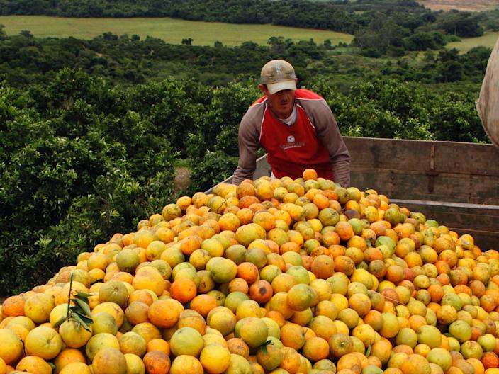 No, even this many oranges won't prevent the coronavirus or any other infectious disease.