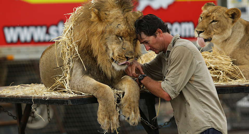 Stardust lion trainer Matthew Ezekial with a lion. Source: Stardust Circus