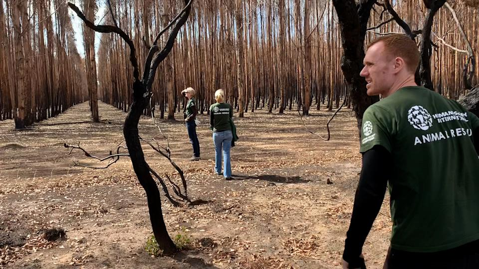 Evan Quartermain and the HSI team in a burnt out forest on Kangaroo Island.
