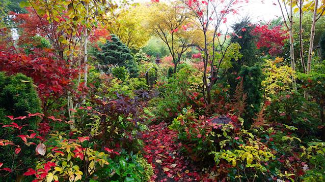 Colours of autumn in our woodland lower garden
