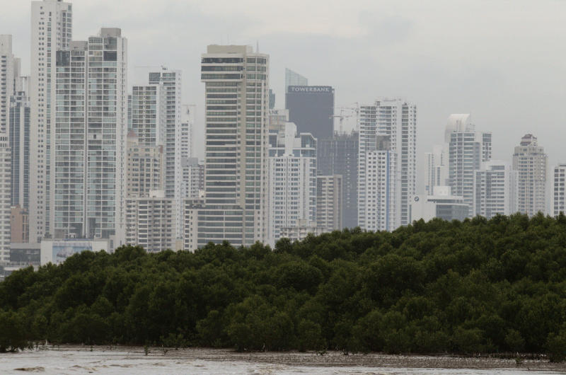 In this photo taken Oct. 18, 2012, a mangrove forest hugs the coastline of Panama City. A multi-year boom in Central America's fastest-growing economy has unleashed a wave of development along the Bay of Panama. Environmentalists warn that the construction threatens one of the world's richest ecosystems and the habitat for as many as 2 million North American shorebirds. (AP Photo/Arnulfo Franco)