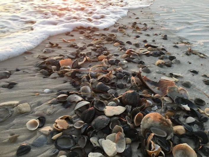 There's great shelling to be found along the Alabama shore, especially on Dauphin Island, near Gulf Shores.