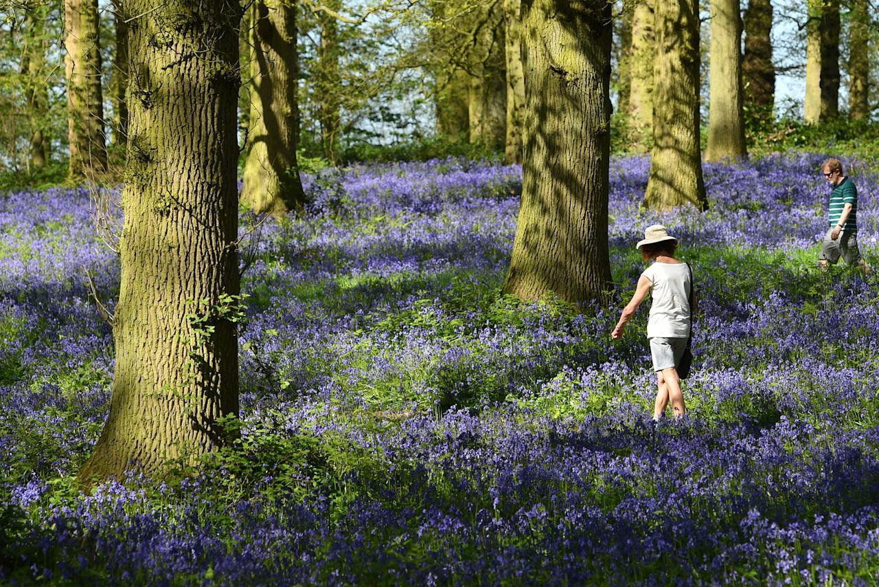 <p>People walk amongst the bluebells on the Blickling Estate in Norfolk as Britain sizzled in a spring heatwave – which saw England swelter in record-breaking highs of 28.7C (Picture: PA) </p>