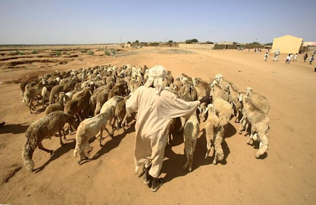 A man walks with his sheep near North Darfur's state capital el-Fasher on September 6, 2016 (AFP Photo/ASHRAF SHAZLY)