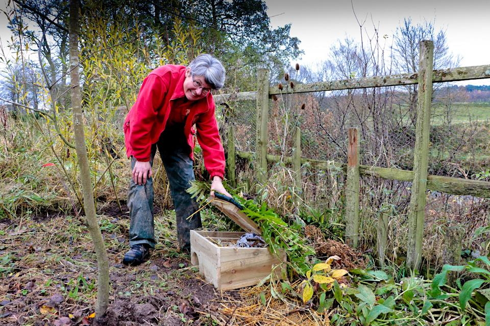Julie Dougall, part of the gardens team, inspects one of the new custom-built hedgehog houses in The Queen Elizabeth Walled Garden. (Dumfries House)