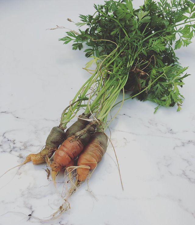 "<p>Although she seems fairly meh about her not 'too appetising' homegrown carrots, we love the commitment to fresh veg! <a href=""https://www.womenshealthmag.com/uk/food/a706210/soup-recipes-detox-healthy-meal-ideas/"" rel=""nofollow noopener"" target=""_blank"" data-ylk=""slk:Healthy soup recipe"" class=""link rapid-noclick-resp"">Healthy soup recipe</a>, anyone? </p><p><a href=""https://www.instagram.com/p/CFl57ojjMoj/"" rel=""nofollow noopener"" target=""_blank"" data-ylk=""slk:See the original post on Instagram"" class=""link rapid-noclick-resp"">See the original post on Instagram</a></p>"