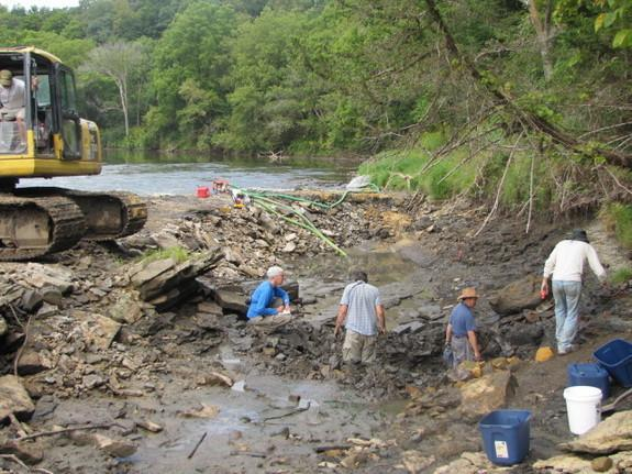 The Iowa Geological Survey discovered the fossils during a mapping project of the Upper Iowa River. Researchers subsequently found at least 20 P. decorahensis individuals, and had to dam the river to safely remove the specimens.