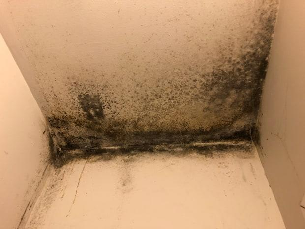 When Radio-Canada journalists visited the site, they found mould.