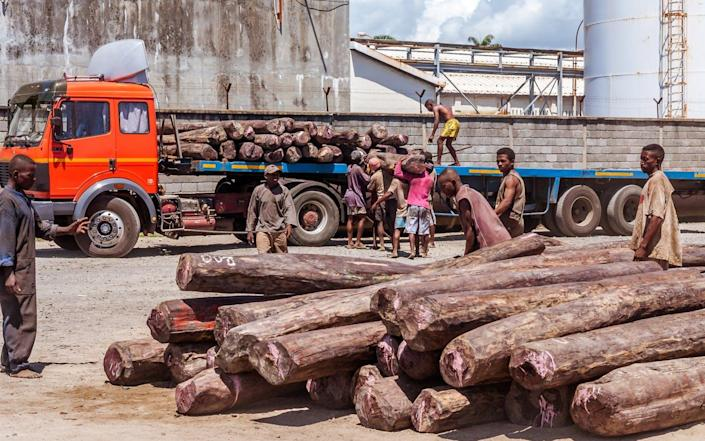 """<span class=""""caption"""">Rosewood, the name for several endangered tree species that make beautiful furniture, being loaded in Madagascar. </span> <span class=""""attribution""""><a class=""""link rapid-noclick-resp"""" href=""""https://www.shutterstock.com/image-photo/toamasina-madagascar-april-12-2014-loading-733827985"""" rel=""""nofollow noopener"""" target=""""_blank"""" data-ylk=""""slk:Pierre-Yves Babelon/Shutterstock"""">Pierre-Yves Babelon/Shutterstock</a></span>"""