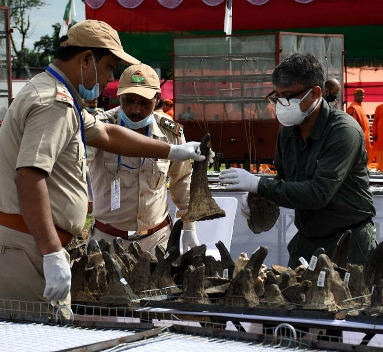 """<div class=""""paragraphs""""><p>Forest Department officials and police arrange rhino horns prior to the event</p></div>"""