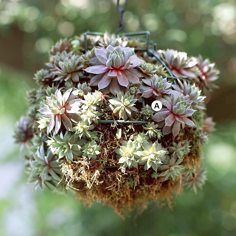 25 Easy Ideas for Creating Eye-Catching Hanging Baskets