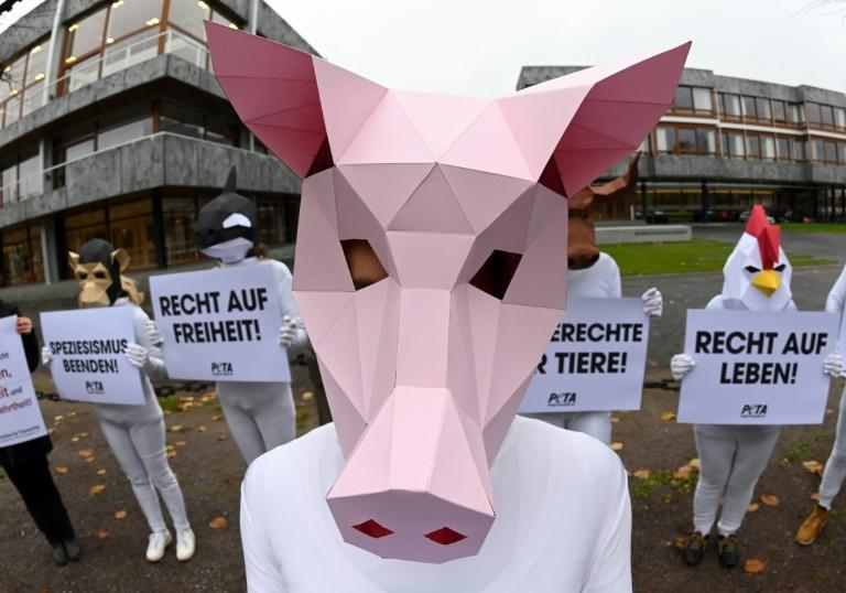 PETA argues that under German law, animals cannot be harmed without reasonable explanation (AFP Photo/Uli Deck)
