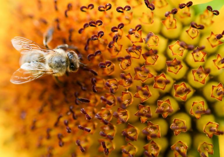 A large-scale study in Germany in 2017 was one of the first to raise global alarm bells about the plunge in insect populations