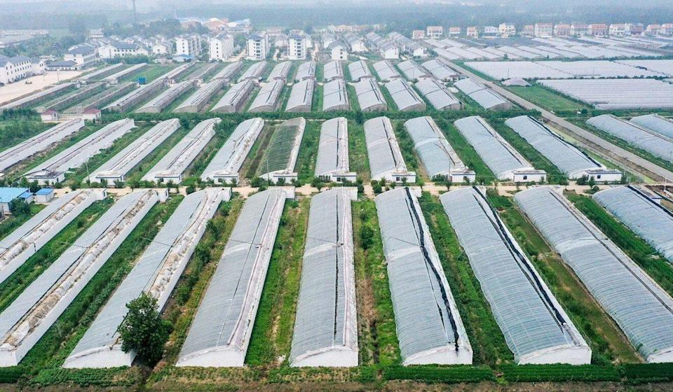 Wan Jianmin, vice-president of the Chinese Academy of Agricultural Sciences, says China has more than 520,000 preserved resources but fewer than 15,000 have been accurately identified. Photo: Xinhua