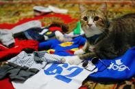 A cat sits among its cosplay costumes in Jakarta