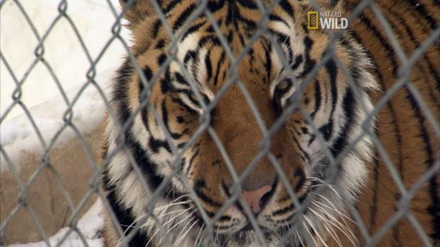 Animal Interventionists Help Tame Exotic Pet Owners