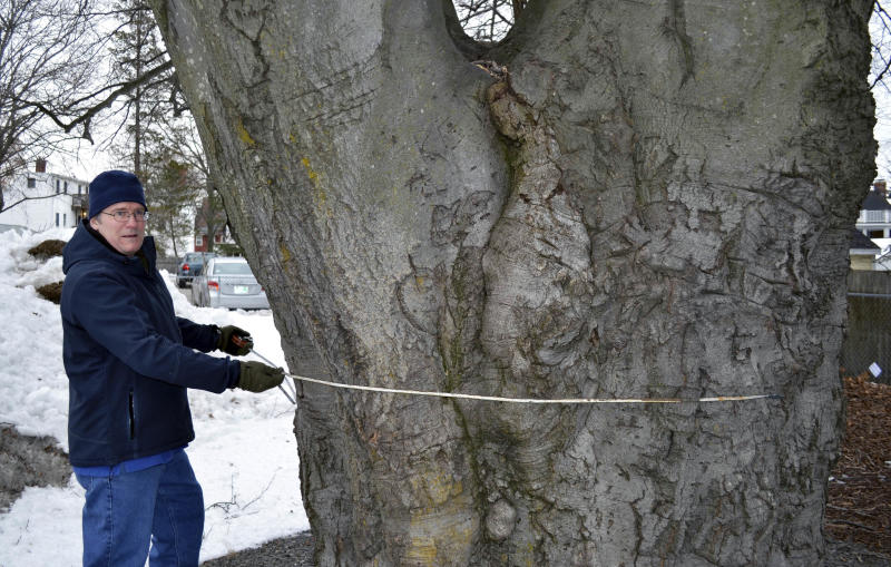 Forget roses and birds. These folks like their big trees