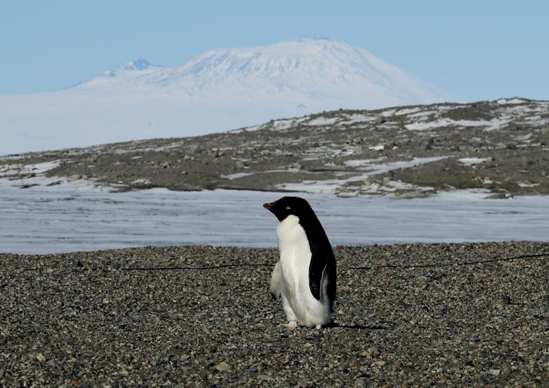Antarctica is home to penguins, seals, whales and other marine life with krill a staple food for many species