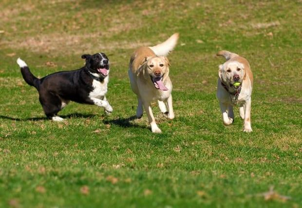 The Cadboro Bay Residents' Association is proposing that Saanich permit two temporary enclosed off-leash dog parks at Cadboro-Gyro park. (Shutterstock / Stanimir G.Stoev - image credit)