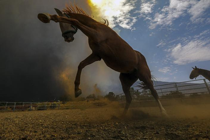 A horse wearing blinders rears, front hooves pawing the air, as smoke fills the sky.