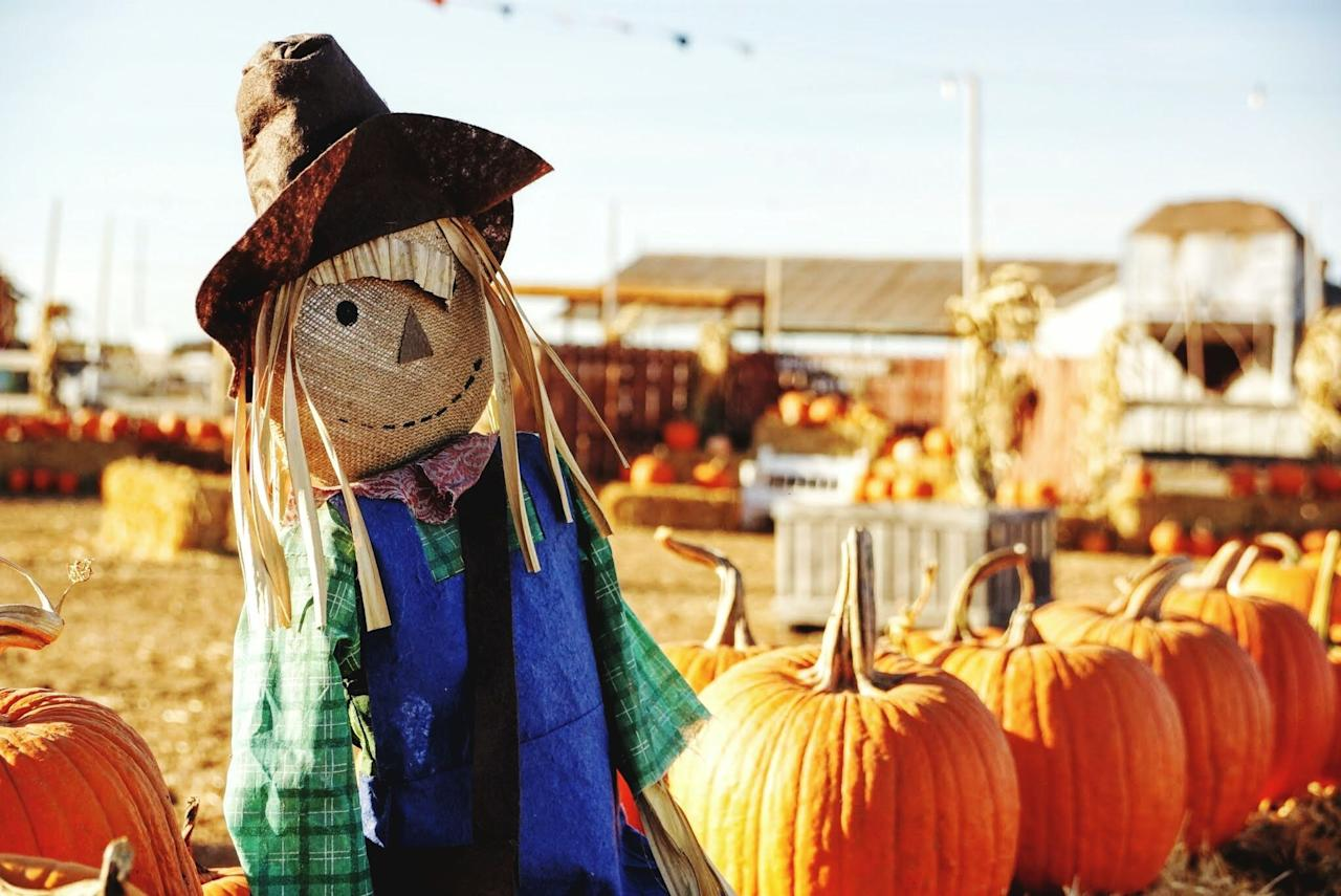 """<p>Any farmer knows the importance of scarecrows—they keep prey away and ensure your crops grow nice and strong. However, you don't have to own a plot of land to have a scarecrow on your property. In fact, there are plenty of not-so-scary, and dare we say, very cute, scarecrow ideas to add to your home decor this fall. Whether you're looking for how to make a scarecrow yourself, or indoor and outdoor scarecrow decorations, there's a DIY tutorial or item you can buy on this roundup that'll look great in your space. And the great thing about scarecrow decor is that once fall is here, you can leave it out until <a href=""""https://www.countryliving.com/entertaining/g1371/thanksgiving-decorations/"""">Thanksgiving</a> is over—it fits right in for both Halloween and Turkey Day. Once you've made one—or a few—of these scarecrows, don't put away your craft supplies just yet. There are so many <a href=""""https://www.countryliving.com/diy-crafts/g1533/fall-crafts/"""">fall crafts</a> you can create this season. We have <a href=""""https://www.countryliving.com/diy-crafts/g2542/fall-crafts-for-kids/"""">autumnal DIYs you can make with your kids</a>—even <a href=""""https://www.countryliving.com/diy-crafts/g22143289/halloween-crafts-for-toddlers/"""">crafts for toddlers</a>!—a collection of <a href=""""https://www.countryliving.com/diy-crafts/g1988/fall-craft-projects/"""">fall wreaths</a>, and <a href=""""https://www.countryliving.com/diy-crafts/g1916/mason-jar-fall-crafts/"""">festive Mason jars</a> to create. Of course, because it's fall, that means it's time for pumpkin everything too—and with all of our <a href=""""https://www.countryliving.com/diy-crafts/g1350/pumpkin-decorating-1009/"""">pumpkin decorating ideas</a>—including <a href=""""https://www.countryliving.com/diy-crafts/g279/pumpkin-carving-ideas/"""">pumpkin carving tutorials</a> and <a href=""""https://www.countryliving.com/diy-crafts/g1363/painted-pumpkins/"""">painted pumpkin plans</a>—the options are nearly endless. <br></p>"""