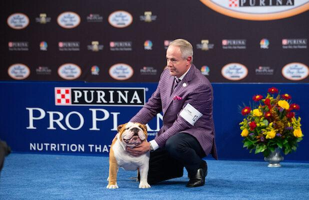 Thor the Bulldog and 6 Other Very Good Boys and Girls From the 2019 National Dog Show (Photos)