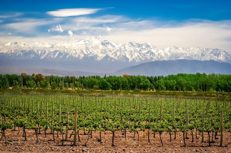 Organic vineyards near Mendoza in Argentina: Getty Images/iStockphoto