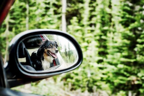 """""""We're on our way. And we've brought the dog"""" - Credit: Blend-Memento / Alamy"""