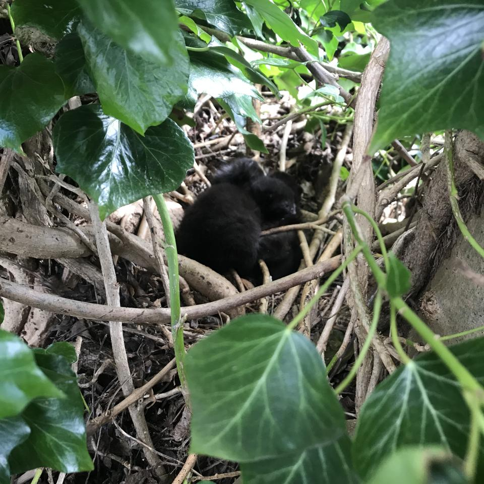 The nest of kittens found in Amersham by Cats Protection Chiltern Branch (Cats Protection/PA)
