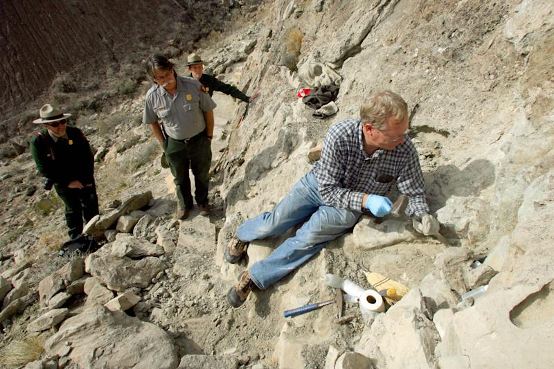 FILE - In this Tuesday, Dec. 2, 2014 file photo, Brigham Young University paleontologist Brooks Britt, right, works to excavate a sauropod humerus from a hillside on the Fossil Discovery Trail at Dinosaur National Monument in Utah. The fossil was vandalized in September, 2014, making it necessary to remove it for safekeeping. In a paper published Tuesday, April 11, 2017, BYU officials say they've identified the fossil as that of a new dinosaur, named Moabosaurus, since it was found near Moab, Utah. (Geoff Liesik/Deseret News via AP, File)