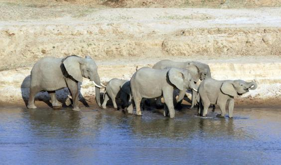 Elephants at South Luangwa (Will Whitford)