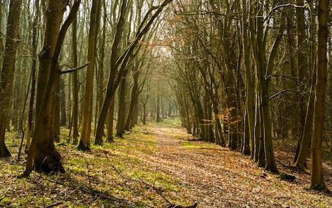 Wytham Woods, Oxfordshire - Credit: David Hammant/Alamy