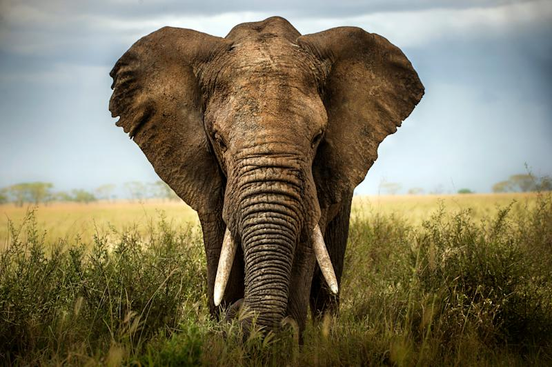 The illegal trade of wildlife is valued at $200bn annually (Getty Images/iStockphoto)