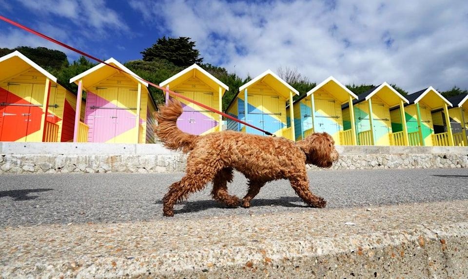 Willow the dog walks past the newly refurbished beach huts during the fine weather in Folkestone, Kent, which are included in the Folkestone Triennial arts festival (Gareth Fuller/PA) (PA Wire)