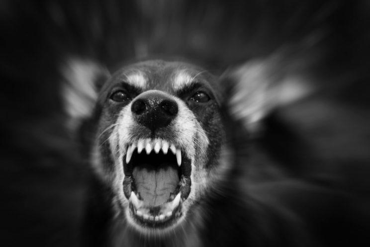 The United States Postal Service released its annual dog attack city rankings on April 6, 2017.