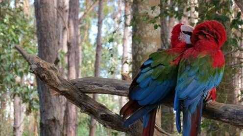 """<span class=""""caption"""">Forests are not just carbon 'warehouses' they are extraordinary ecosystems supporting a diverse range of birds, animals and plants.</span> <span class=""""attribution""""><span class=""""source"""">Jessica Vian</span>, <span class=""""license"""">Author provided</span></span>"""