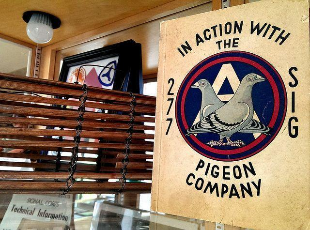 """<p>Enlightenment comes in often unexpected places. One of those: The <a href=""""http://www.atlasobscura.com/places/the-american-pigeon-museum"""" rel=""""nofollow noopener"""" target=""""_blank"""" data-ylk=""""slk:American Pigeon Museum"""" class=""""link rapid-noclick-resp"""">American Pigeon Museum</a> in Oklahoma City, which is dedicated to the intelligent bird that many of us take for granted. You can learn about hero bird who helped deliver messages during World Wars I and II, and also take in a flight show. (Flickr photo by <a href=""""https://flic.kr/p/o26xwg"""" rel=""""nofollow noopener"""" target=""""_blank"""" data-ylk=""""slk:Sheila Scarborough"""" class=""""link rapid-noclick-resp"""">Sheila Scarborough</a>) </p>"""