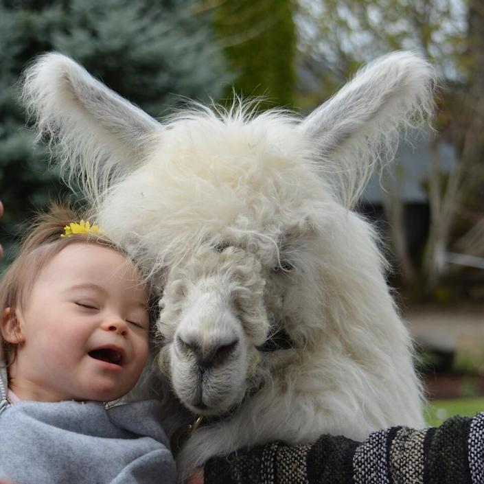 Caesar the No Drama Llama offers support and love at protests