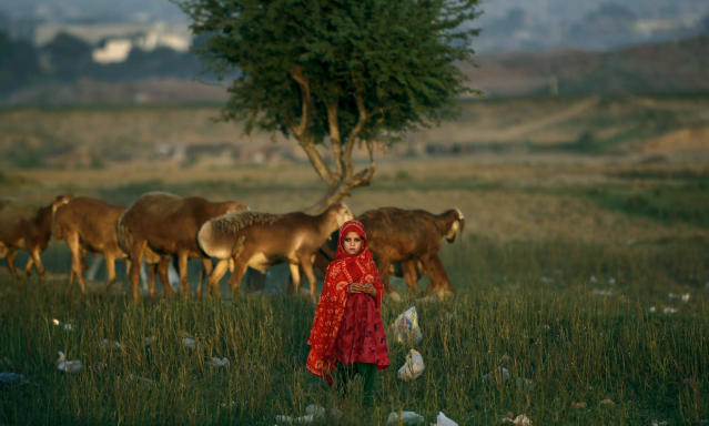 <p>An Afghan refugee girl stands next to her family's sheep in a field next to a slum area on the outskirts of Islamabad, Pakistan, Oct. 1, 2012. (Photo: Muhammed Muheisen/AP) </p>