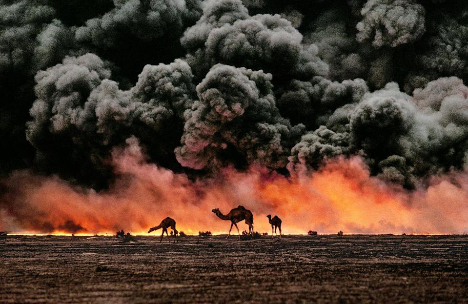 <p>1991. Camels among a backdrop of burning oil fields in Kuwait during the Gulf War.</p>