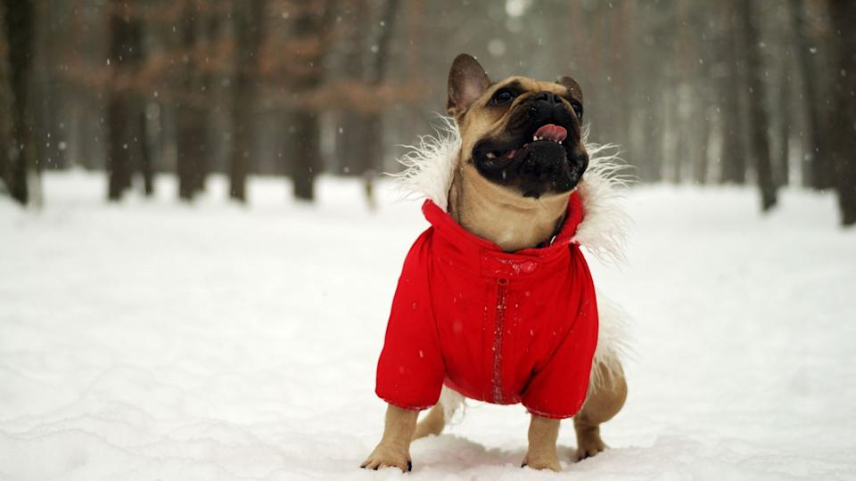 Should your dog be wearing a jacket this winter? We've got the best winter jackets and boots for your four-legged friend.