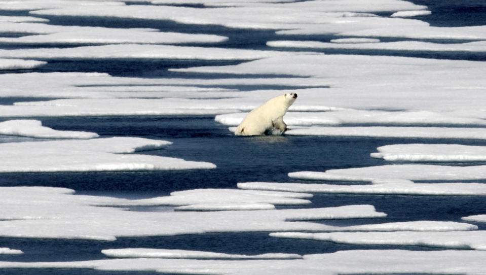 FILE - In this July 22, 2017, file photo a polar bear steps out of a pool while walking on the ice in the Franklin Strait in the Canadian Arctic Archipelago. The Biden administration is stepping up its work to figure about what to do about the thawing Arctic, which is warming three times faster than the rest of the world. The White House said Friday, Sept. 24, 2021, that it is reactivating the Arctic Executive Steering Committee, which coordinates domestic regulations and works with other Arctic nations. It also is adding six new members to the U.S. Arctic Research Commission, including two indigenous Alaskans. (AP Photo/David Goldman, File)