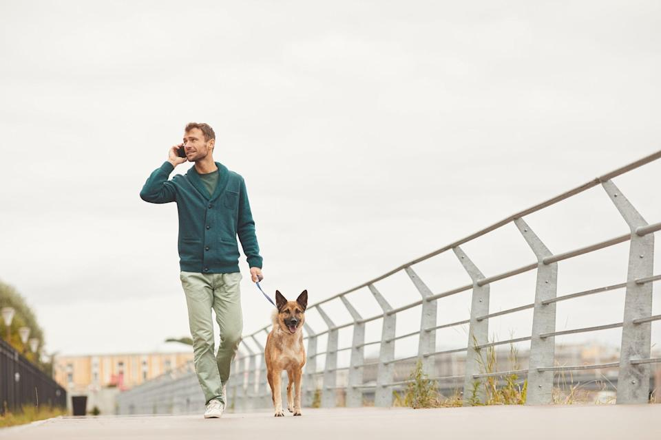 Revenue generated from compulsory dog licences could help fund dog welfare initiativesGetty/iStock