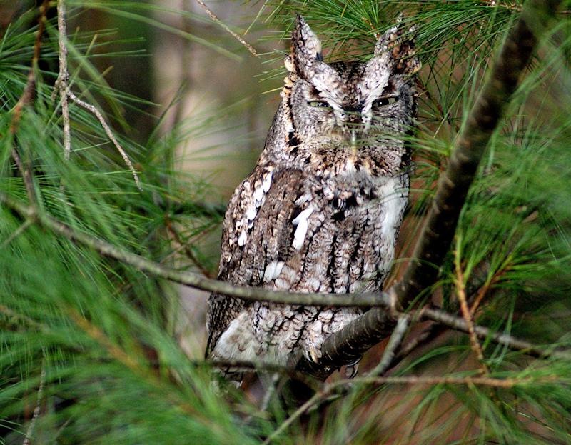 Ga. Family Who Found Owl in Christmas Tree Say They Felt 'Magic and Mystery' of Holiday Season