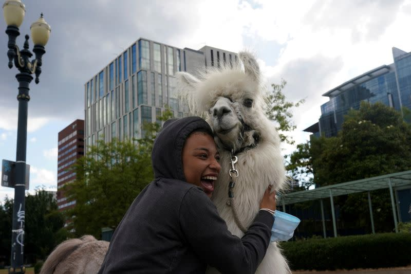 Furry llama brings touch of Zen to protesters and police in Portland