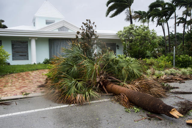 <p><strong>Fort Lauderdale</strong><br>A fallen palm tree is seen in a residential neighborhood in Fort Lauderdale, Fla., as Hurricane Irma blows in on Sept. 10, 2017. (Photo: Paul Chiasson/The Canadian Press via AP) </p>