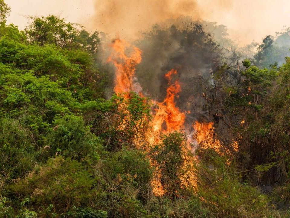 Land is being burnt 'at record levels' in Pantanal (World Animal Protection)