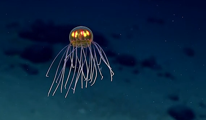 Scientists Just Spotted This Alien Jellyfish Creature in the Mariana Trench