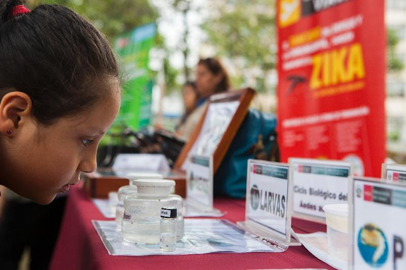 A child looks at information displayed by the Peruvian Health Ministry on mosquitos (Aedes aegypti) that transmit Zika, Dengue and Chikungunya virus in Lima on January 27, 2016